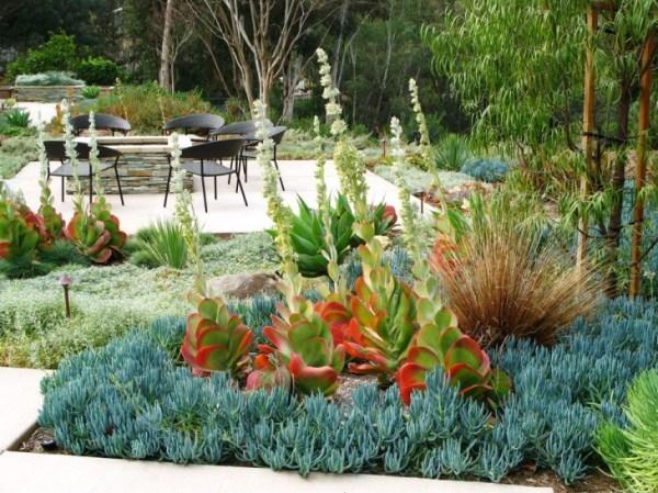 succulent garden design ideas