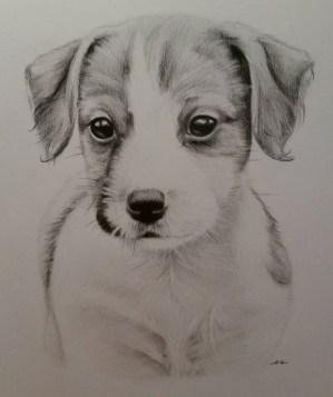 realistic animal drawing sketches designs drawings getdrawings trends