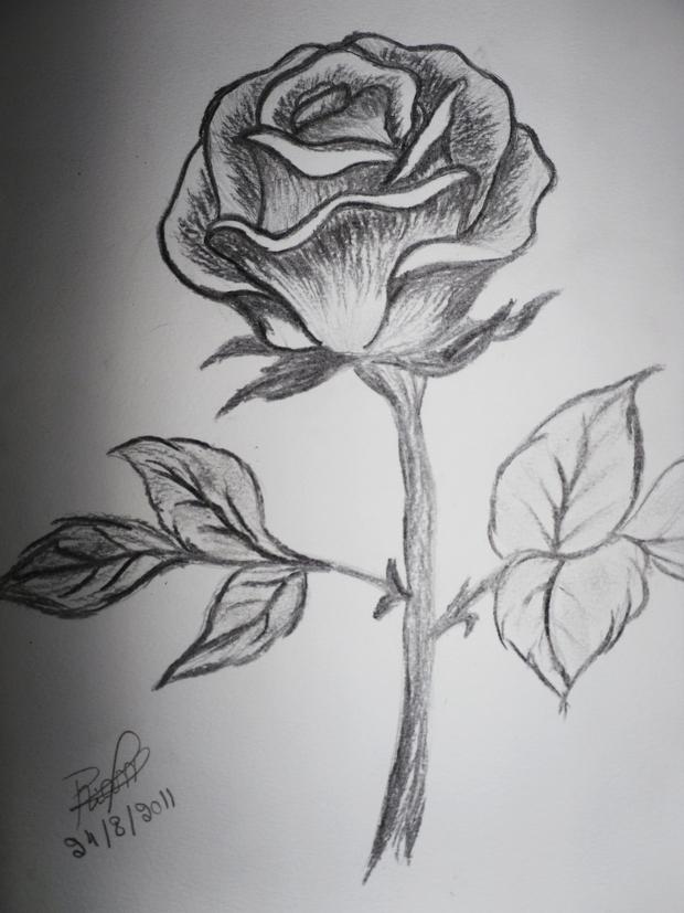 20 Flower Drawings Sketches  Design Trends  Premium PSD Vector Downloads