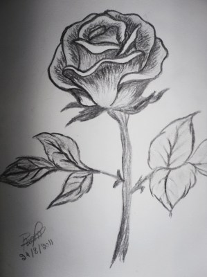pencil flower flowers rose drawing sketch drawings sketches draw tattoo paintingvalley simple designs garden greeting cards