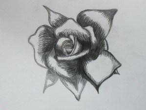 rose drawing drawings simple eye random sketches sketch cliparts pair dark vector different