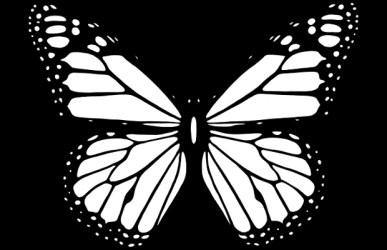 butterfly clipart cliparts graphic designs vector eps