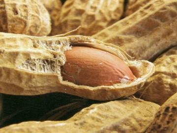 Kacang Bisa Turunkan Kolesterol