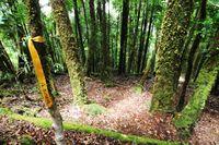 String Line, sebagai penanda jalur pendakian