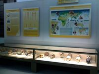Koleksi tengkorak manusia purba (rinaldimunir.wordpress.com)