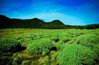 Tegal Alun, Gunung Papandayan (Ambo Arphegio/ dTraveler)