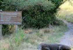 6 Hewan Endemik Yang Jadi Maskot Taman Nasional Indonesia