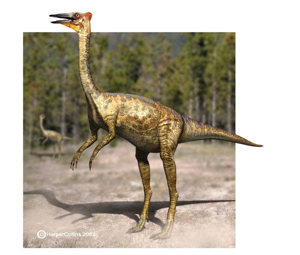 Pelecanimimus Pictures Amp Facts The Dinosaur Database