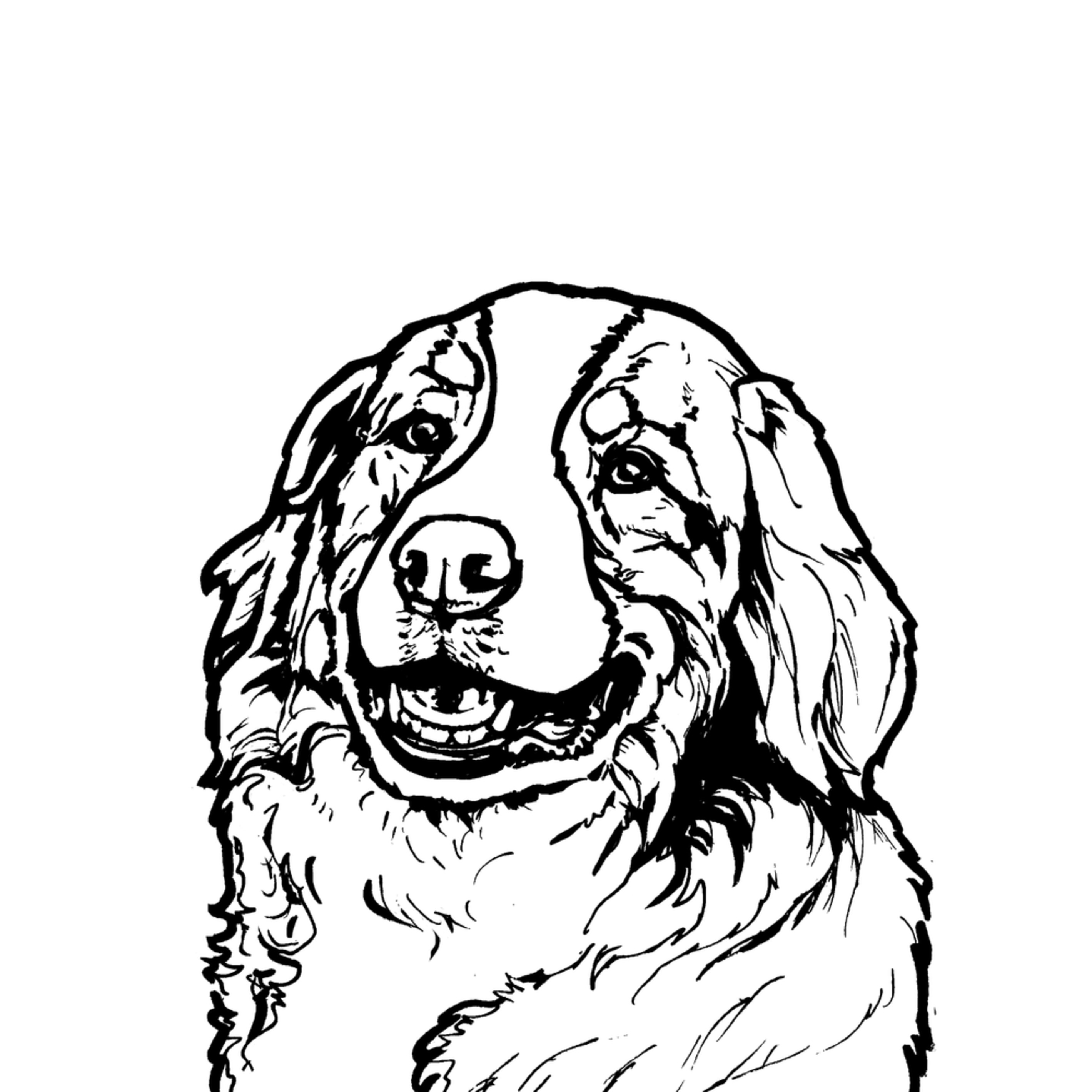 Bernese Mountain Dog Line Drawing Art