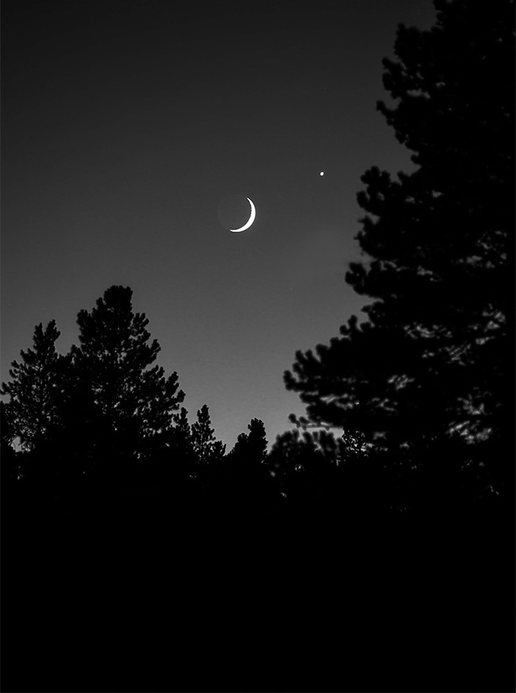 crescent moon and trees