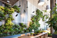 Living Green Walls 101: Their Benefits and How They're ...