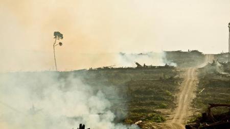 Deforestación para plantaciones de palma /Rainforest