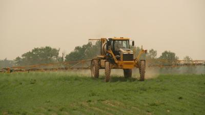 Fumigación de una plantación de maíz.