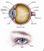 human eye ball anatomy