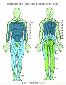Skin dermatome map of the human body also cervical  lumbar dermatomes upper lower leg limbs head rh emedicinehealth