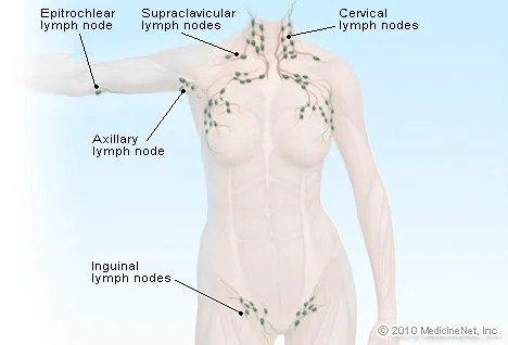 where are my lymph nodes diagram one way wiring e light switch diagrams illustration picture of lymphatic system