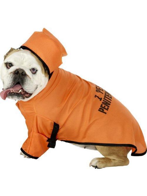 Orange Dog Prisoner Fancy Dress Costume Buy Online