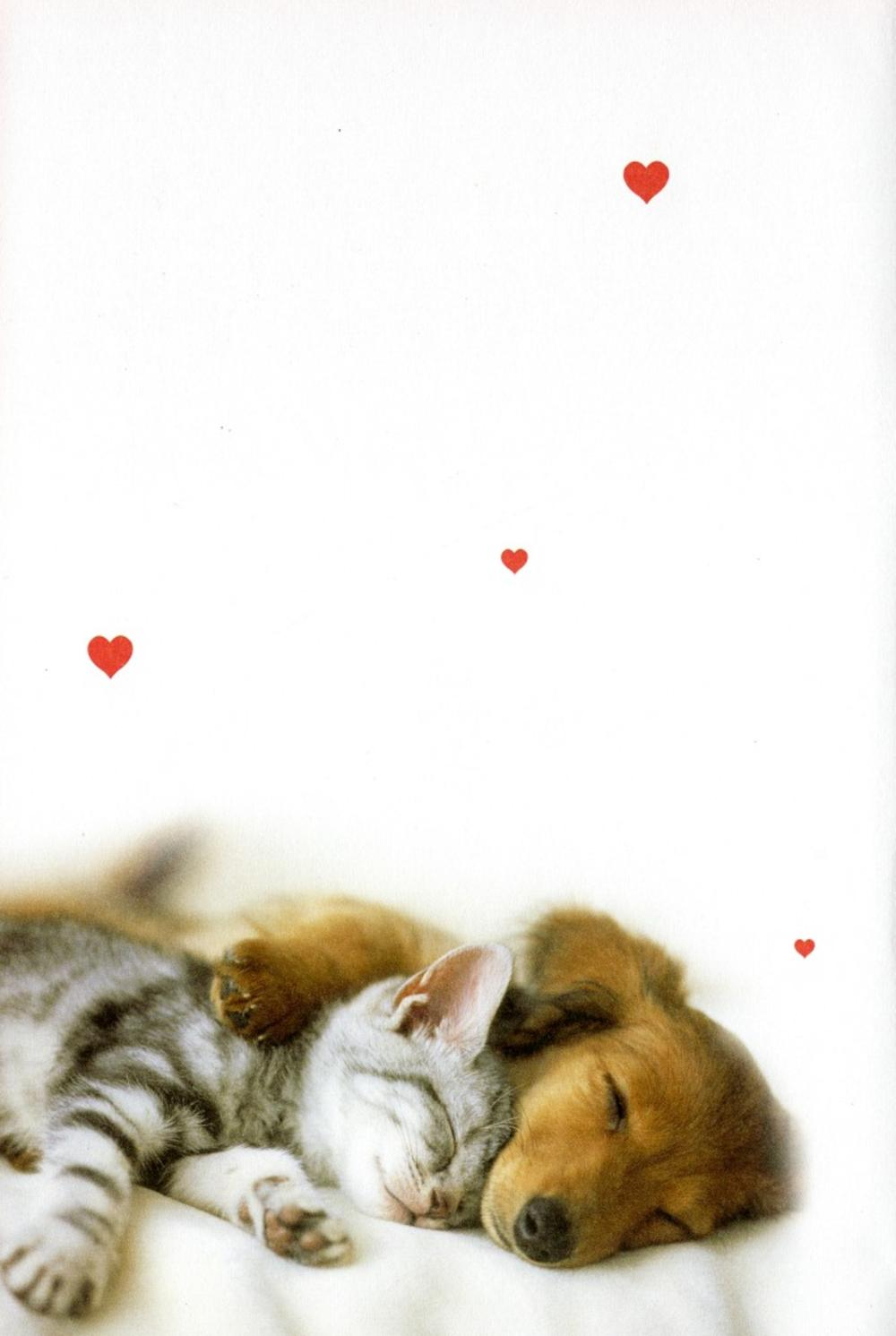 The One I Love Cat Amp Dog Valentines Day Card Cards