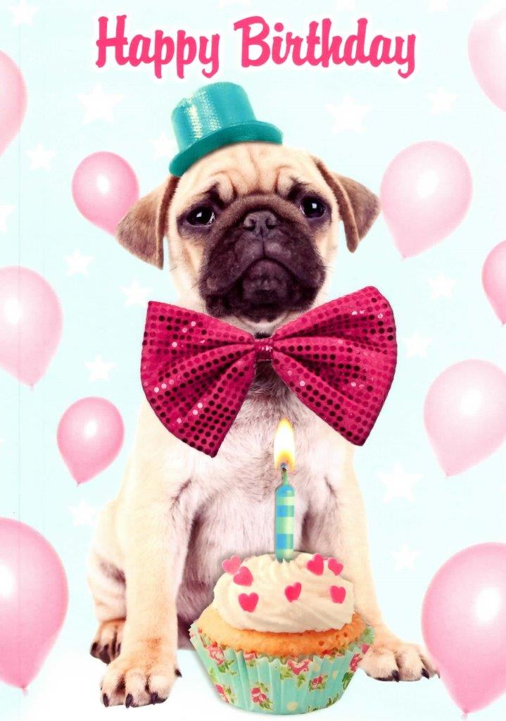 Pug Dog Happy Birthday Greeting Card Cards Love Kates