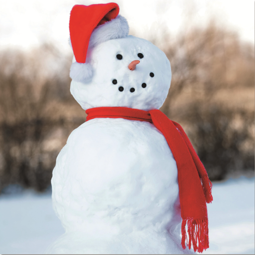 Pack Of 10 Snowman RSPCA Charity Christmas Cards Cards