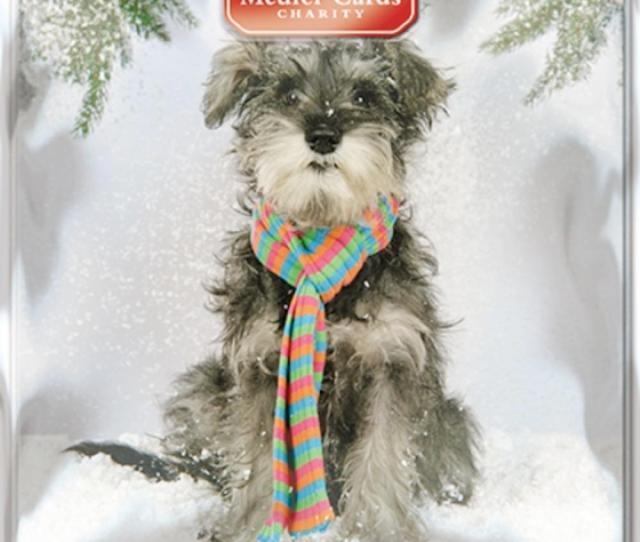Pack Of  Dog In Snow Medici Charity Christmas Cards Supports Multiple Charities