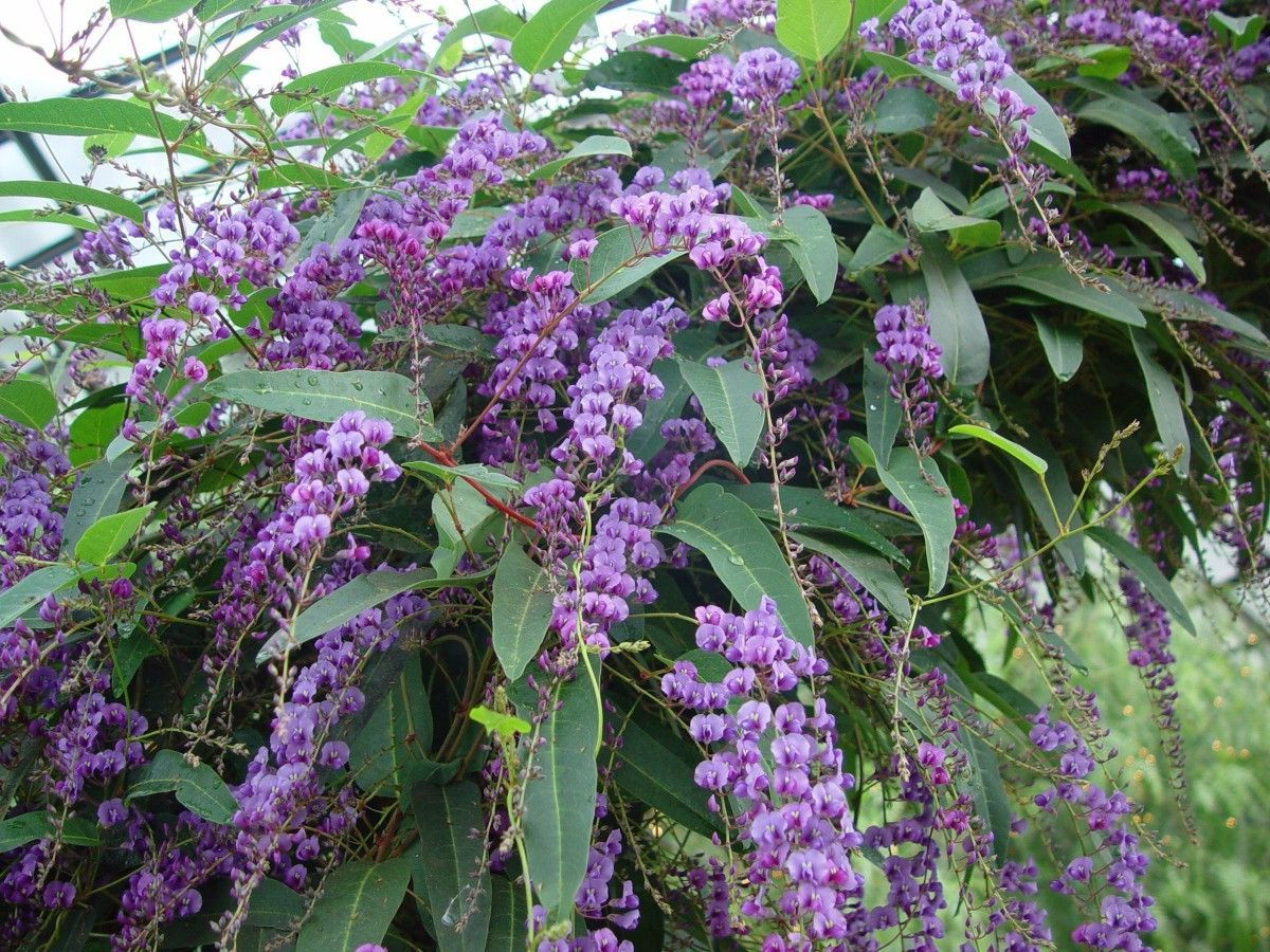 plantas trepadoras con flor