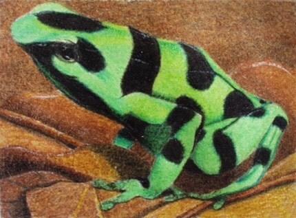 Poison Dart Frog copyright AreYouAnArtist