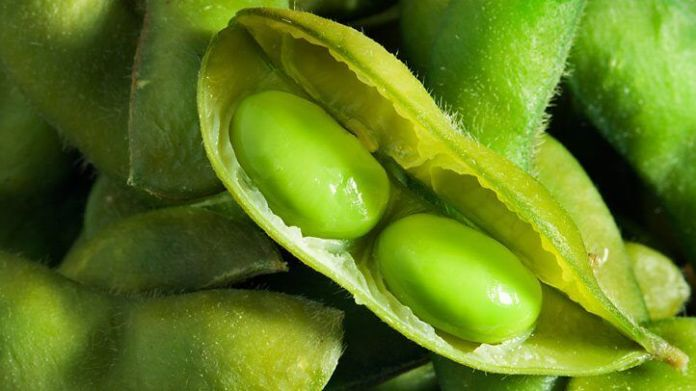 Soybeans which are high in magnesium