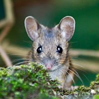 Deadly Hantavirus Worries Yosemite Hikers and Officials - Healthy ...