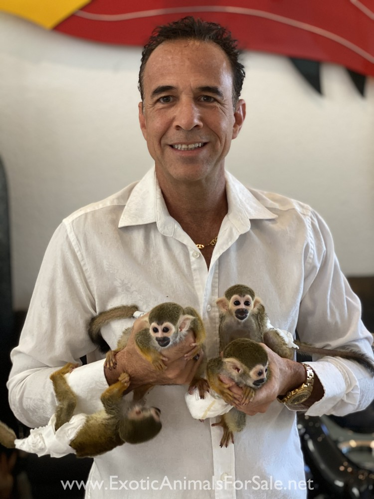 Just Born Baby Squirrel : squirrel, SQUIRREL, MONKEY, BORN., FINANCING, AVAILABLE, TRAINING, AFTER, SUPPORT