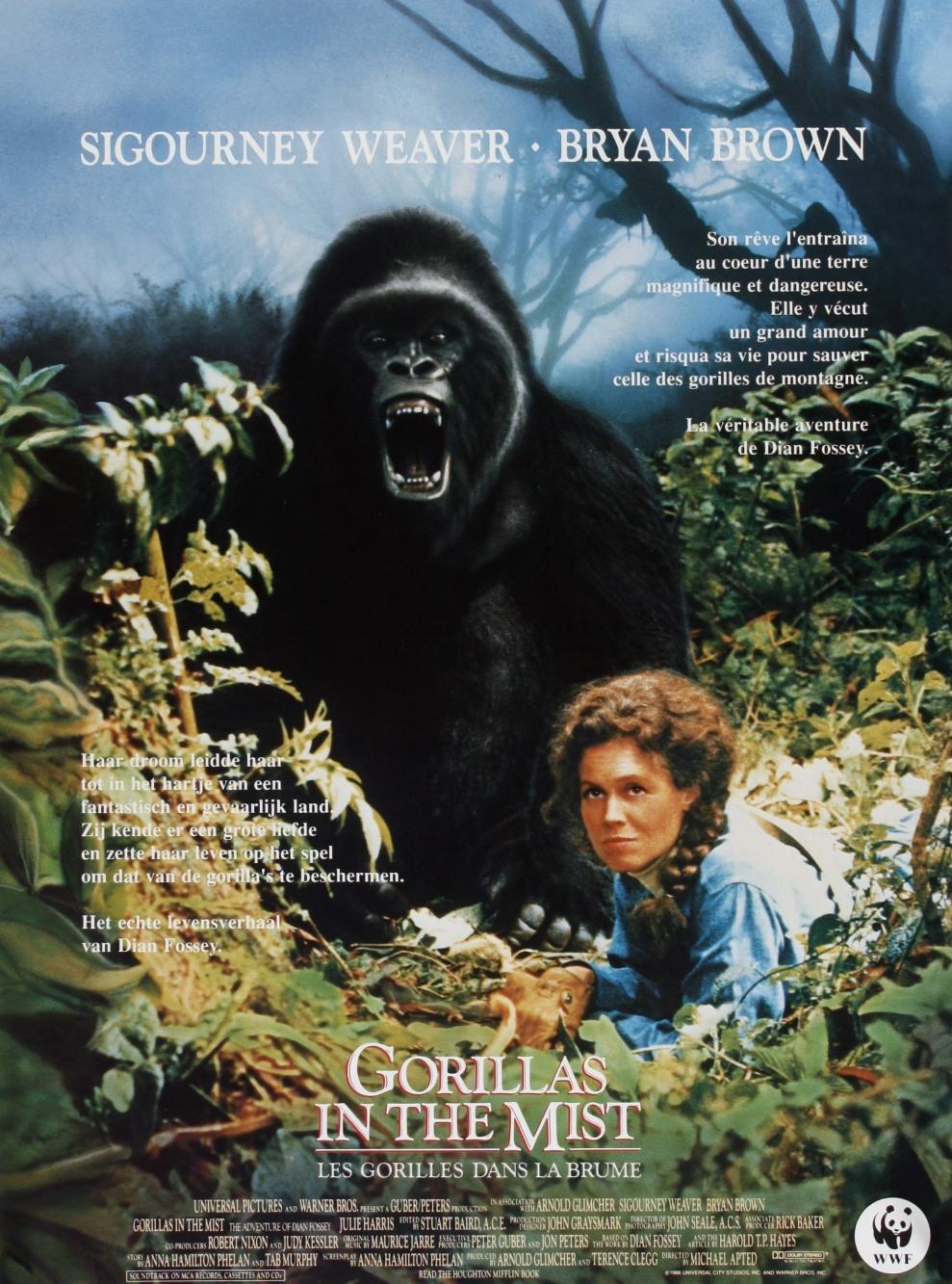 Gorilles Dans La Brume Film : gorilles, brume, Jaquettes, Blu-ray, Gorilles, Brume
