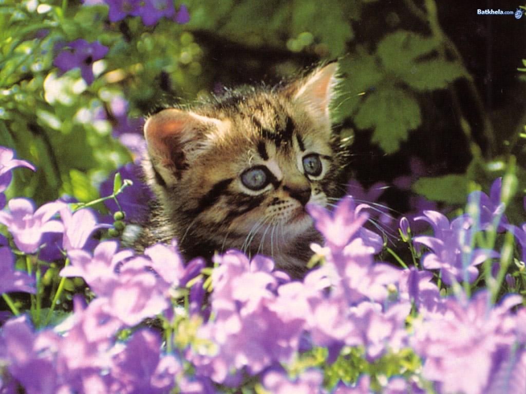 Wallpaper Cute Cats Kittens Aww Cats Wallpaper 248721 Fanpop