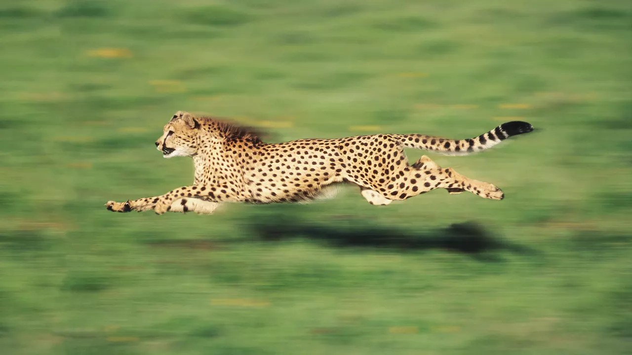 the fastest animal on