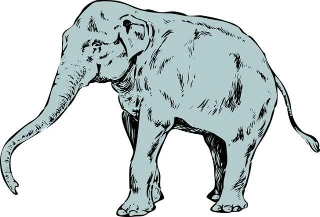 Il primo animale che vedi rivelerà molto sulla tua personalità