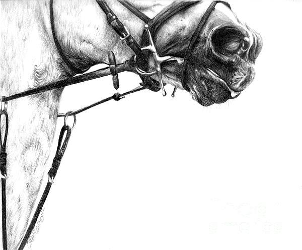 Above The Bit by Sheona Hamilton-Grant