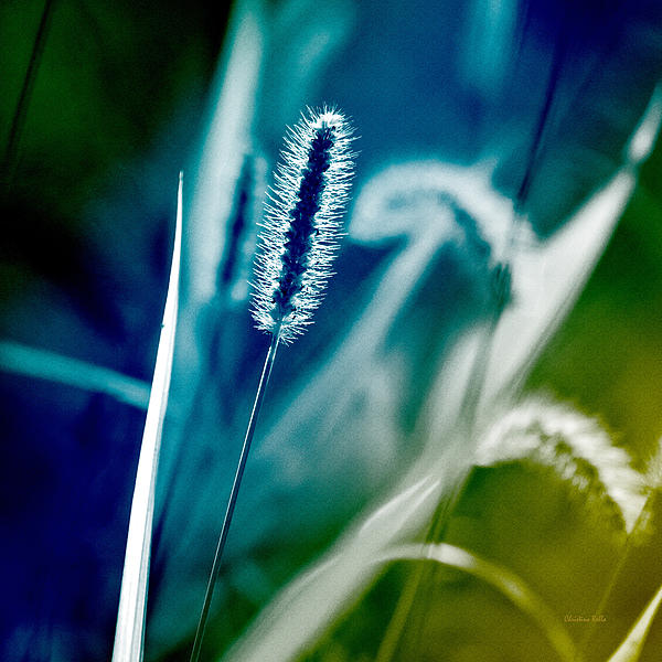 Blue Grass Abstract Art Prints for Sale