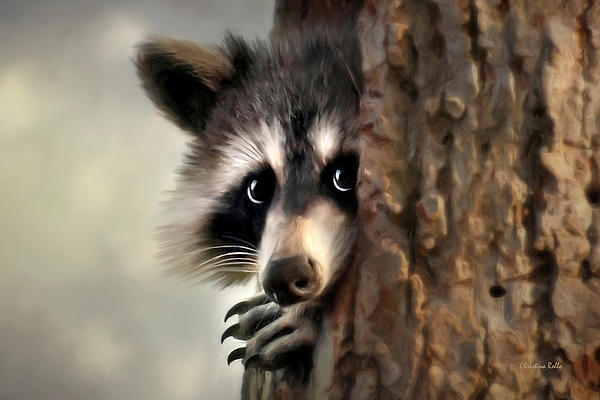 Conspicuous Bandit Raccoon Art Prints for Sale
