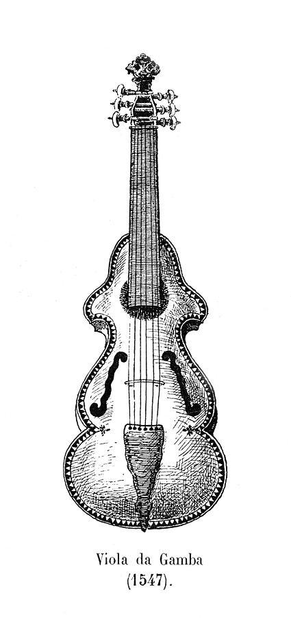 A 16th Century Viola Da Gamba Drawing by Mary Evans
