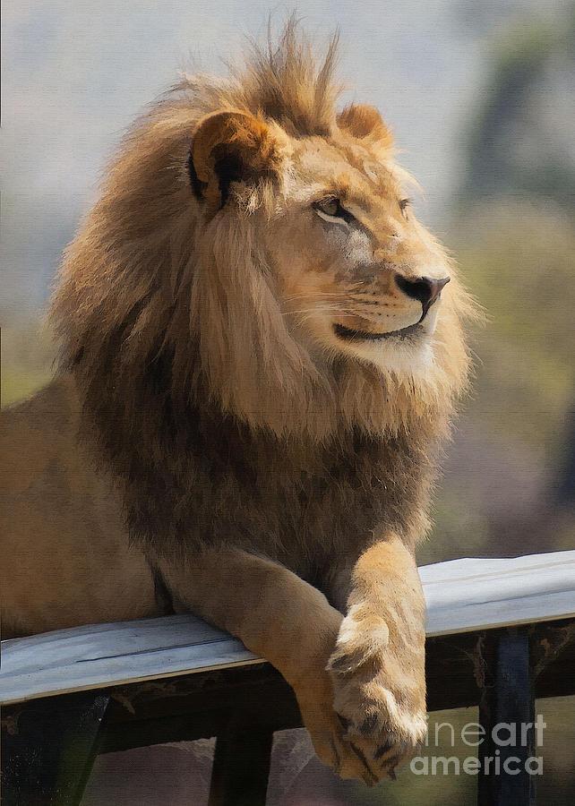 San Diego Iphone Wallpaper Majestic Lion Digital Art By Sharon Foster