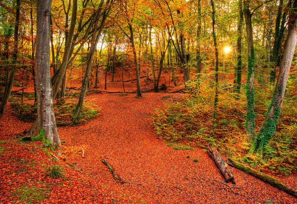 vibrant autumn fall forest landscape