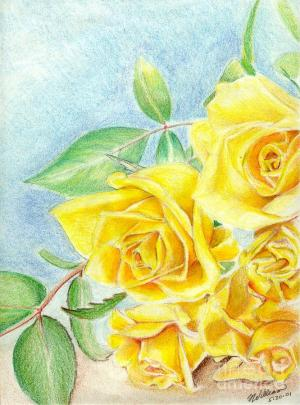 yellow roses drawing bill richards drawings 28th uploaded december which