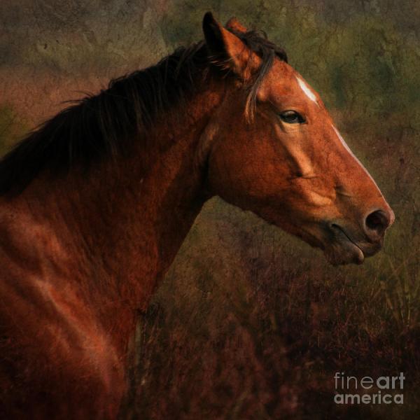 Horse Portrait Angel Ciesniarska