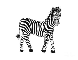 zebra drawing susanne fisher drawings 3rd uploaded march which