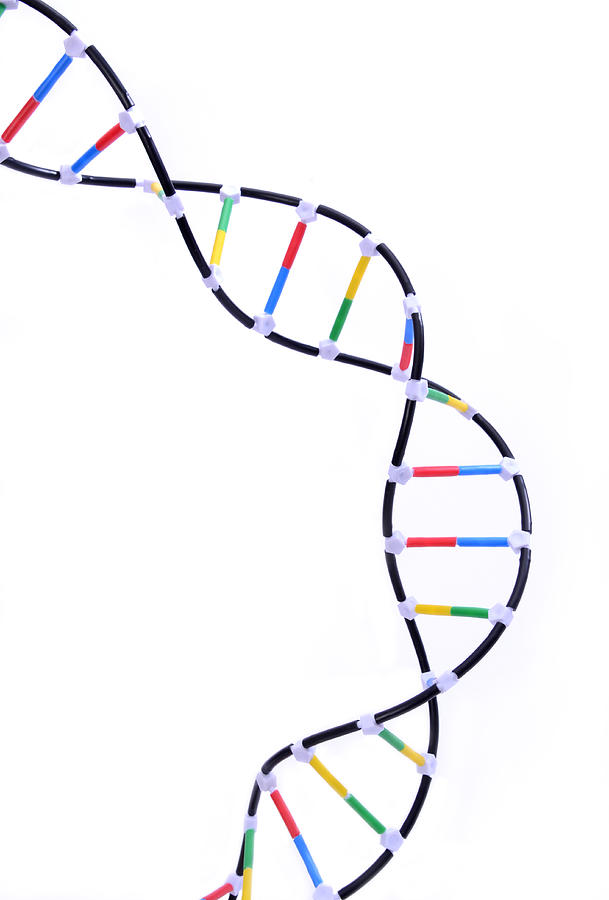 double helix dna model
