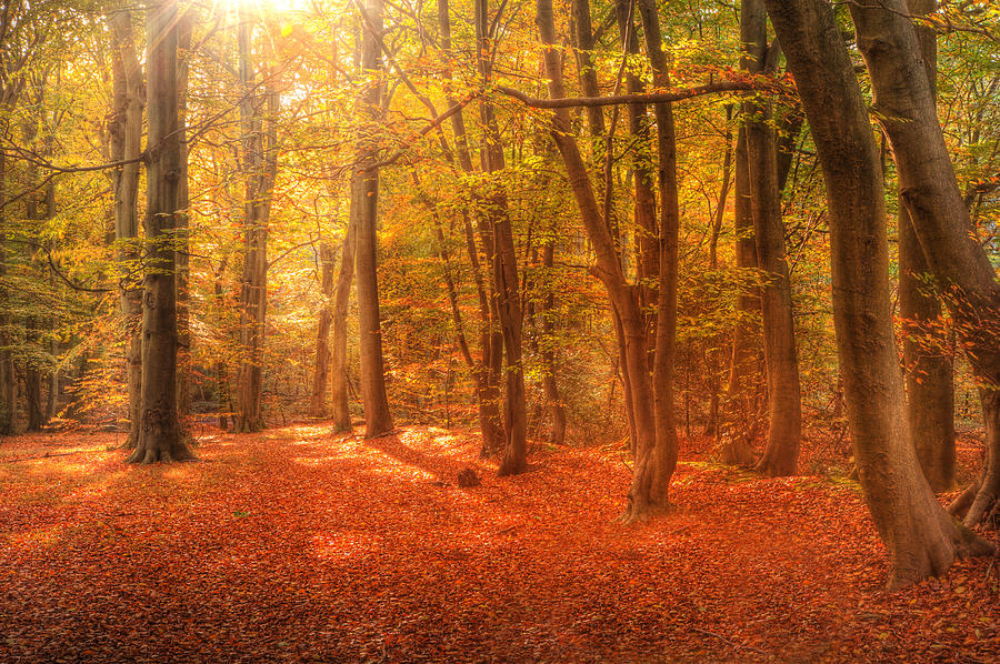 Dark Fall Iphone Wallpaper Vibrant Autumn Fall Forest Landscape Image Photograph By