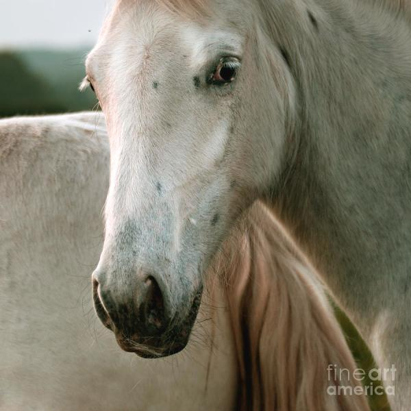Angel On White Horse