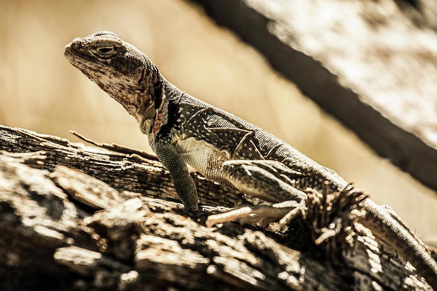 a lizard standing on