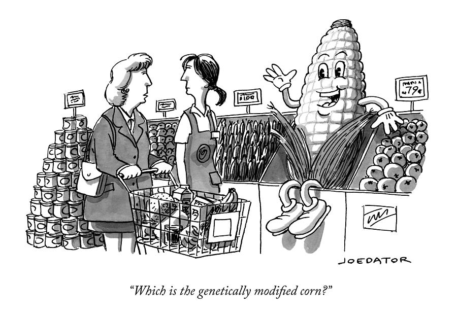 Which Is The Genetically Modified Corn Drawing by Joe Dator