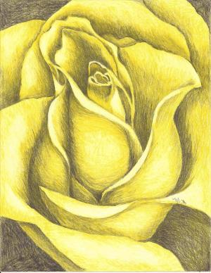 yellow rose drawing beverly margarett drawings pencil colored 21st which uploaded