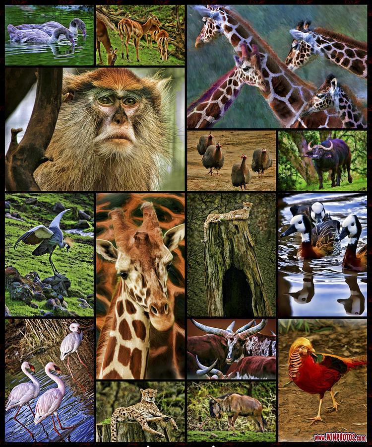 Animal Collage : animal, collage, Animal, Collage, Photograph, Blake, Richards